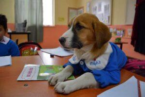 Maestros adoptan a perrito callejero y ahora es alumno de una primaria