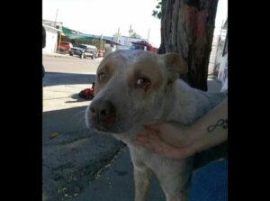 Un perro en Sonora sigue esperando a su amo fallecido