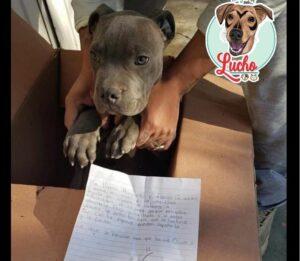 Niño da en adopción a su perro para evitar que su padre lo siguiera maltratando