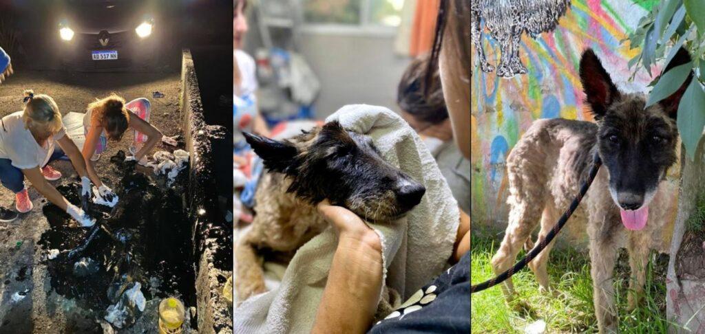 Rescatan con vida a una perrita completamente cubierta de brea