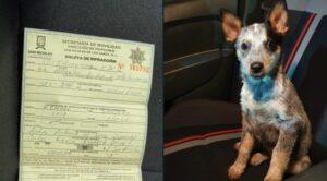 Policías multan a conductor por llevar sobre sus piernas a un cachorro