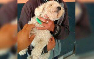Joven roba un perro para regalarselo a su novia por San Valentín y es detenido