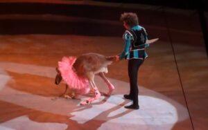Circo ruso causa indignación por poner un tutú a un canguro para obligarlo a bailar