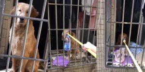 Mujer alimenta al perro de su vecino, quien no pudo regresar por la epidemia del coronavirus