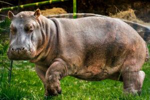 Zoológico cierra por cuarentena y deja sin alimento a animales