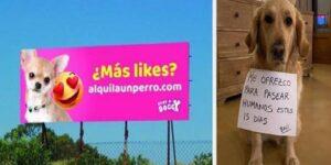 Denuncian a hombre que alquilaba a sus perros para pasearlos en España