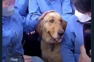 Perro se niega a separarse de los médicos que lo cuidaron durante la cuarentena en China
