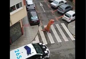 Sujeto se disfraza de dinosaurio para salir a la calle durante la cuarentena