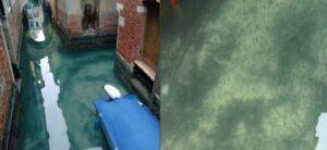 Debido a la cuarentena, canales de Venecia lucen casi cristalinos y hasta se ven peces