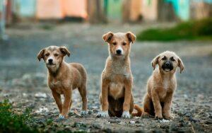 Por 'fake news' sobre el coronavirus envenenan a perros y gatos en Líbano