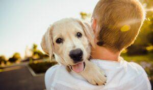 Regalarán tres meses de cerveza a quienes adopten a un perro durante la cuarentena en EU