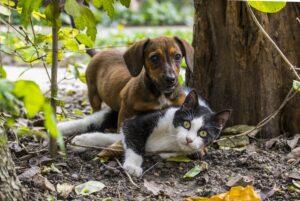 China saca a perros y gatos de lista de animales que pueden ser consumidos