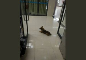 Perrito espera 3 meses a su dueño que murió por Covid-19 en un hospital de China