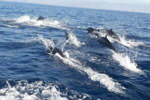 Captan a más de mil delfines nadando cerca de Puerto Escondido
