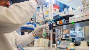 Científicos japoneses crean un virus capaz de eliminar las células cancerígenas