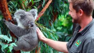 Nace el primer koala en Australia tras los incendios forestales