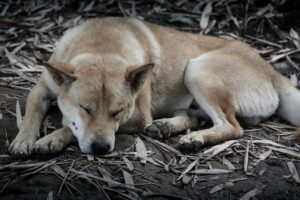 China prohíbe criar perros para consumo humano tras pandemia de covid-19