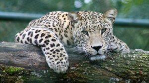 Humanos están provocando la sexta extinción masiva de especies, según estudio