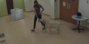 Estudio demuestra que perros pueden rescatar a sus dueños
