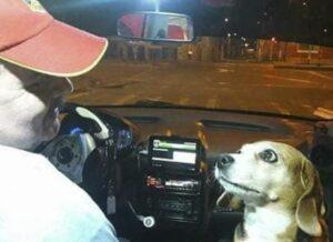 Un perro acompaña a su dueño en sus viajes como taxista y se hace viral