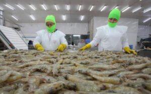 China confirma que muestras de camarones importados dieron positivo a coronavirus