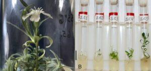 Científicos hacen crecer una planta de una semilla de hace 32 mil años