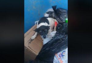 Causa indignación en Brasil el caso de una perrita enferma tirada a la basura