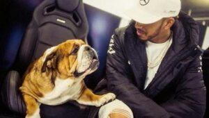Lewis Hamilton recibe crítica en redes por hacer vegano a su perro