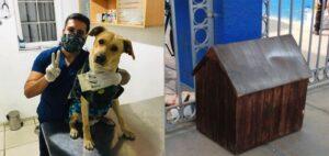 Regalan casa y atención veterinaria al perro que espera a su dueño afuera de un hospital