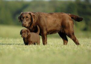 Estudio descarta que un año humano sea igual a siete caninos