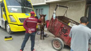 Gobierno de Ecatepec rescata a caballo maltratado