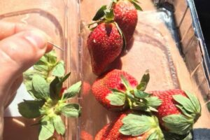 Encuentran agujas en frutas y pan de un supermercado de Australia