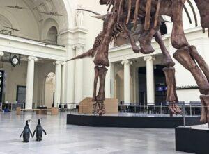 Una pareja de pingüinos visita el Museo de Historia Natural de Chicago