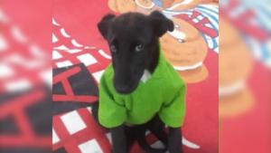 Viralizan historia de perrita en adopción rechazada por ser de color negro