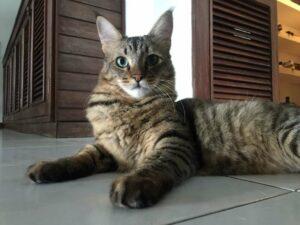 Descubren a un gato cuando intentaba meter droga a un penal en Sri Lanka