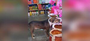 Joven permite que perro callejero coma croquetas en su tienda